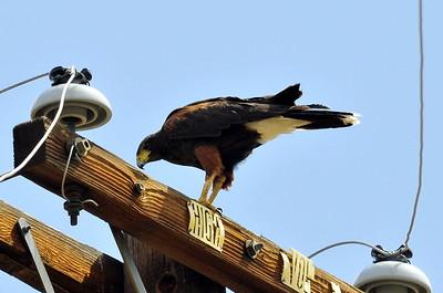 Aguana, Riverside County, CA 07/13/08 (unknown origin)