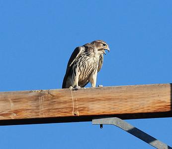 Ramona, CA 11/18/2010