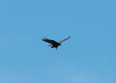 2 different birds/  San Vicente Reservoir, San Diego County, CA 02/11/2009