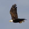eagle34