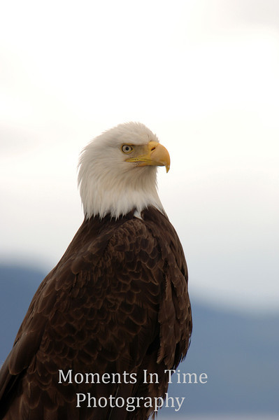 Eagle looking serious