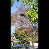 The morning of February 24, 2020 - An American Crow was perched in my neighbor's small tree that hangs over into my front yard. This crow had much to say. When I stopped filming, I realized the video was 1 minute and 11 seconds in length. 111=3!! I am all about the numbers!