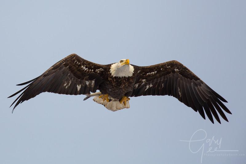 Eagle_2014-34