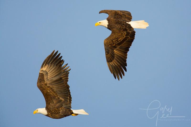 Eagle_2014-27