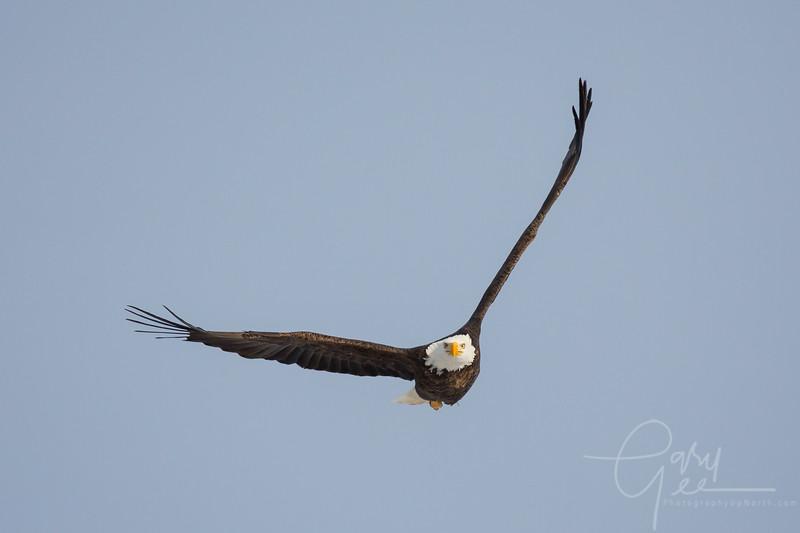 Eagle_2014-31