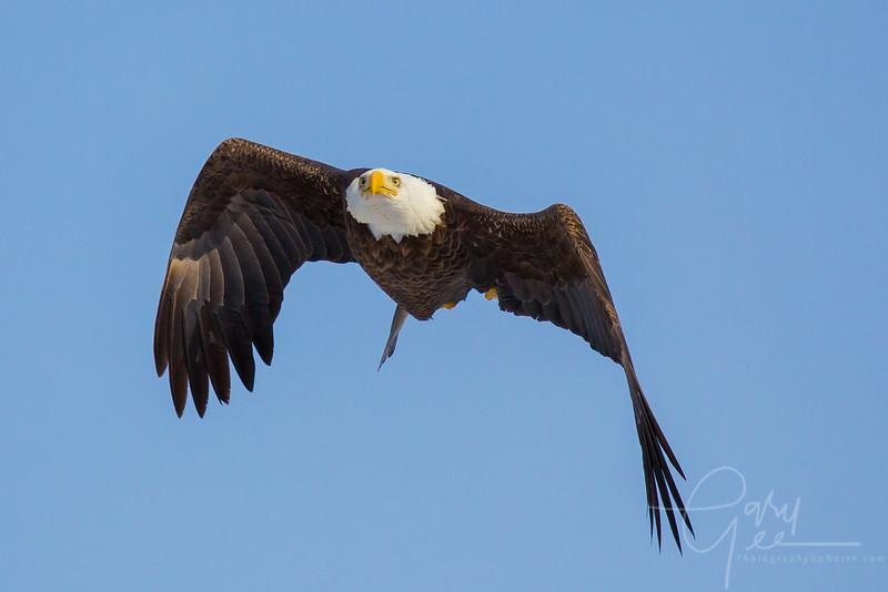 Eagle_2014-48