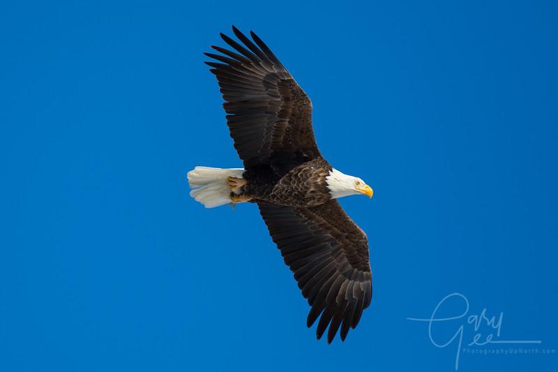 Eagle_2014-15