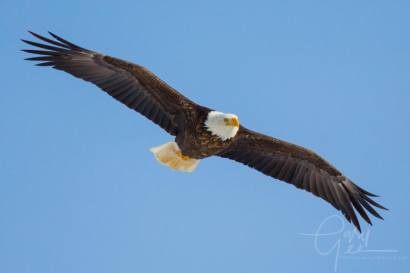 Eagle_2014-51