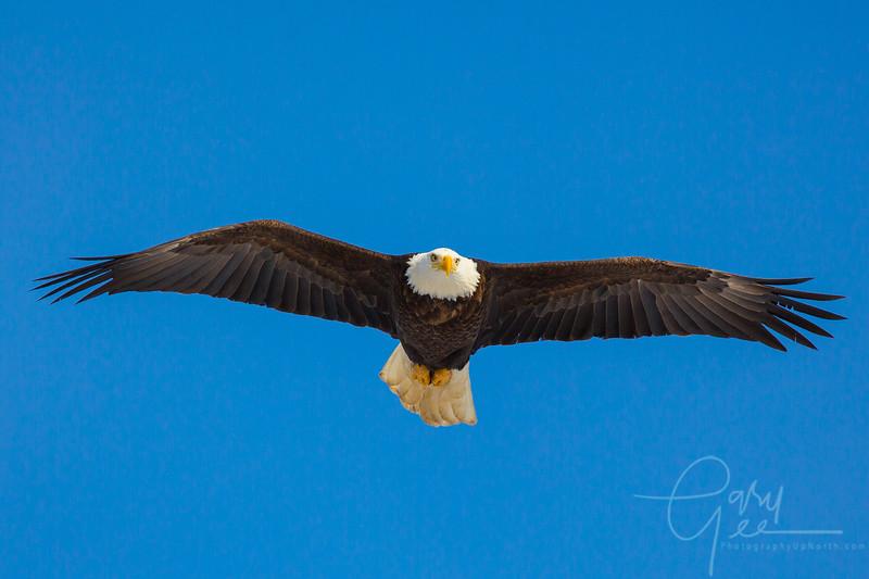 Eagle_2014-45