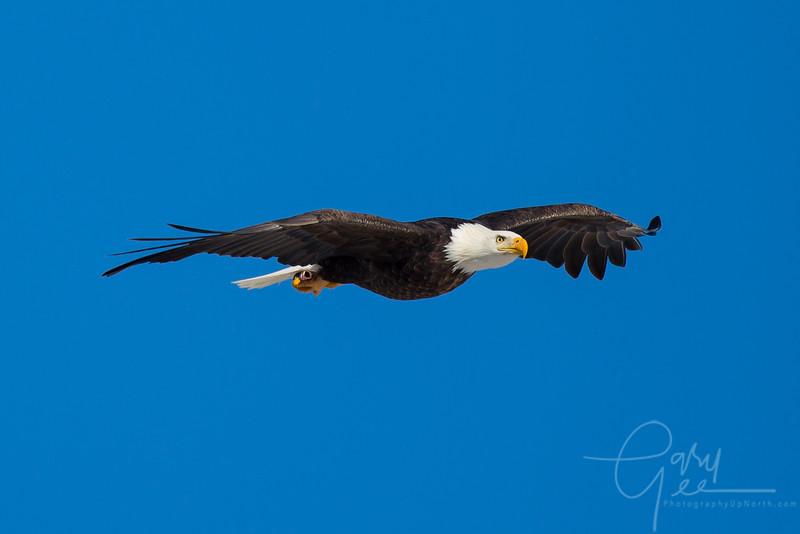 Eagle_2014-14