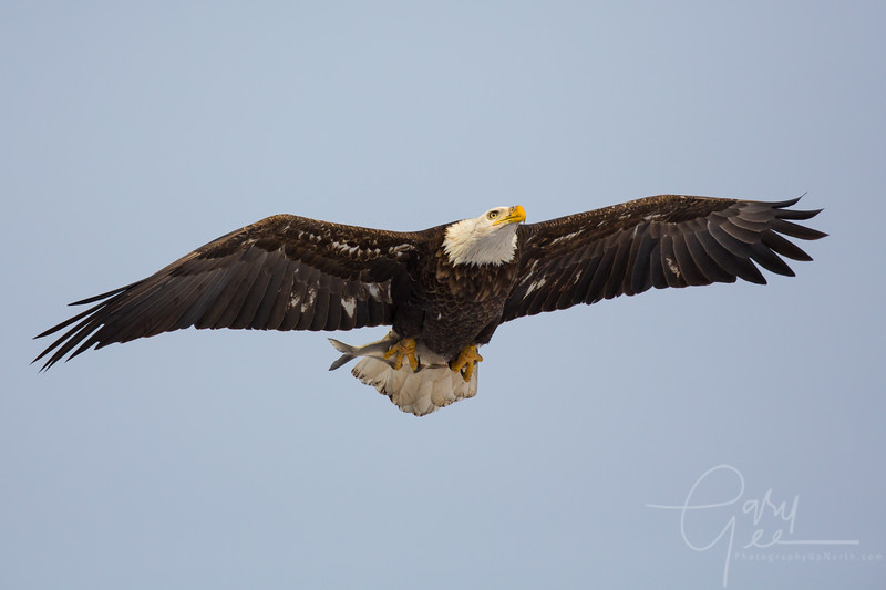 Eagle_2014-35
