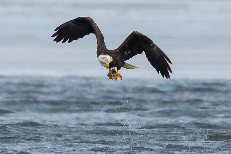 Eagle_2014-66