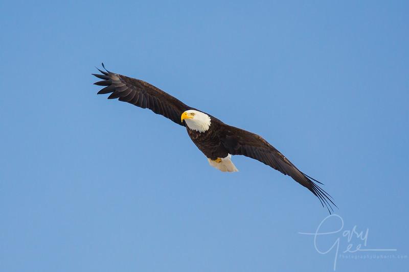 Eagle_2014-40