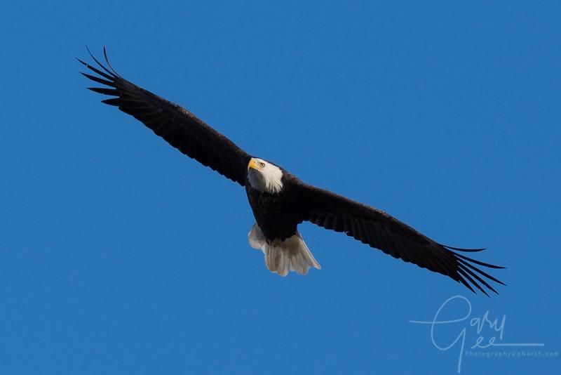 Eagle_2014-26