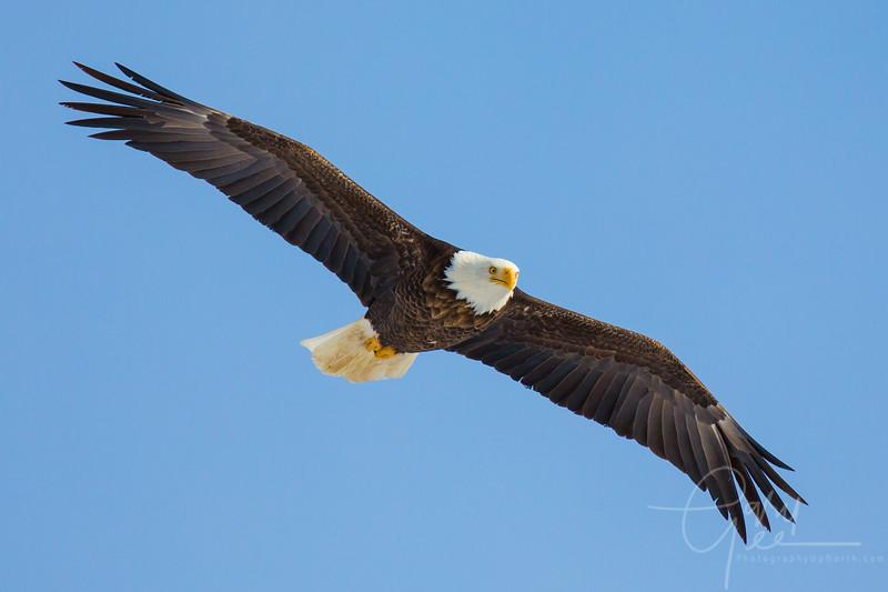 Eagle_2014-52