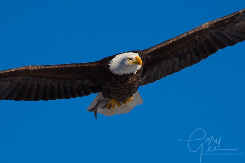 Eagle_2014-2