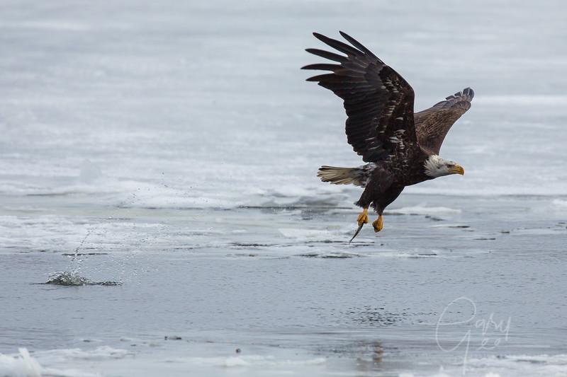 Eagle_2014-68
