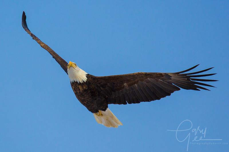 Eagle_2014-55