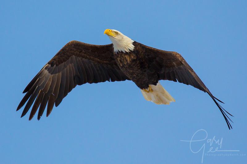 Eagle_2014-54
