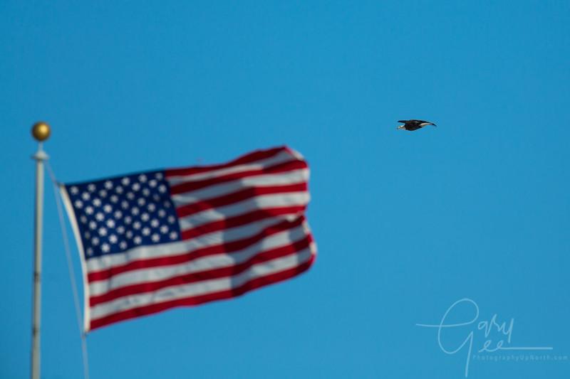 Eagle_2014-13