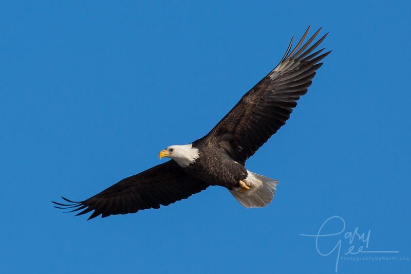 Eagle_2014-22
