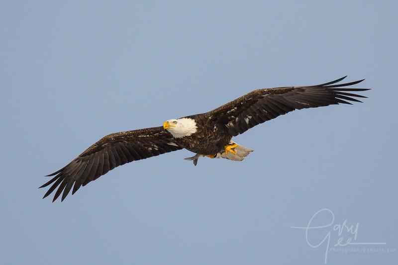Eagle_2014-33