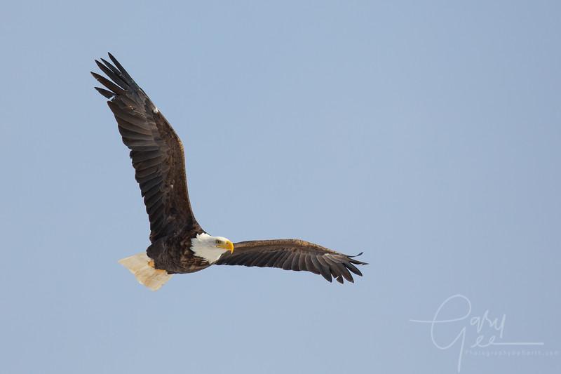 Eagle_2014-37