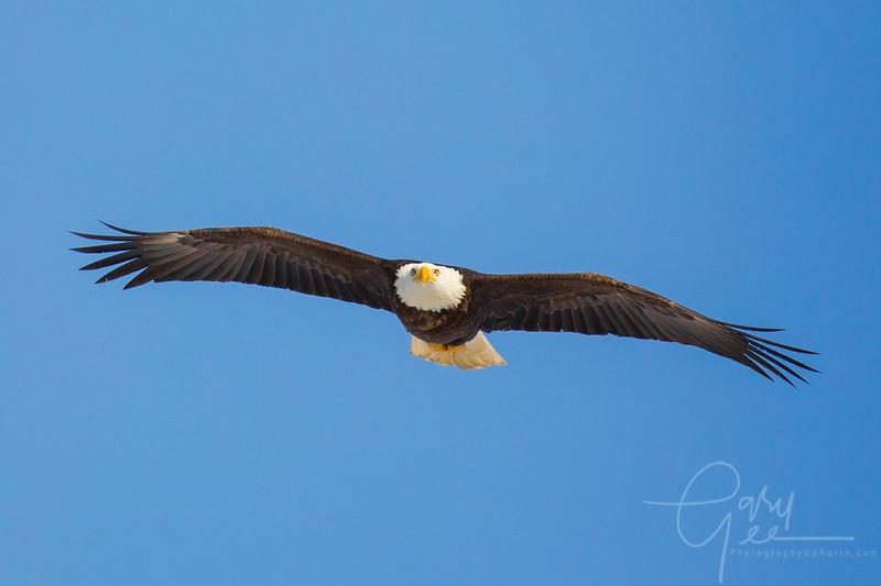 Eagle_2014-44