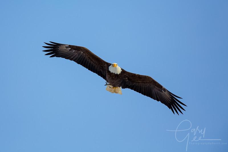 Eagle_2014-39