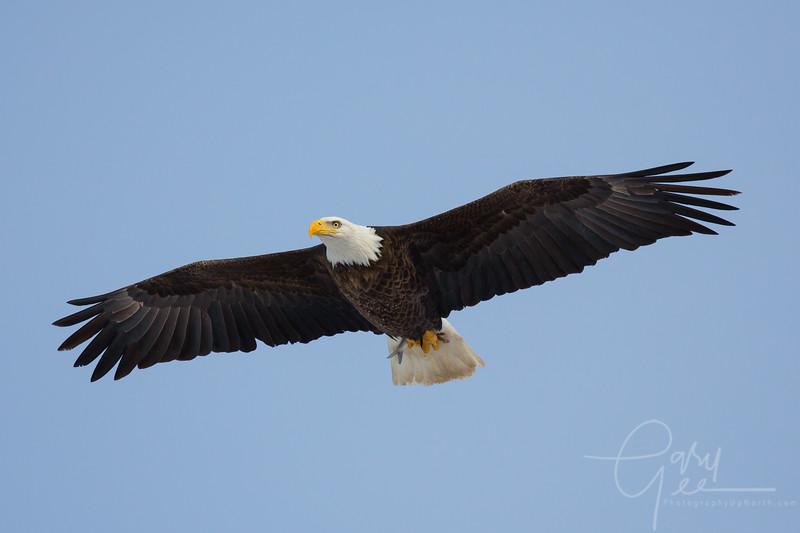 Eagle_2014-38