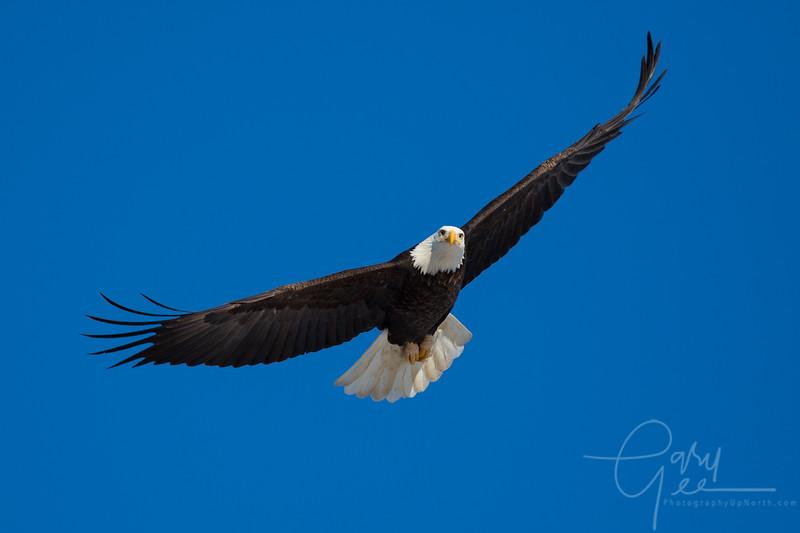Eagle_2014-6