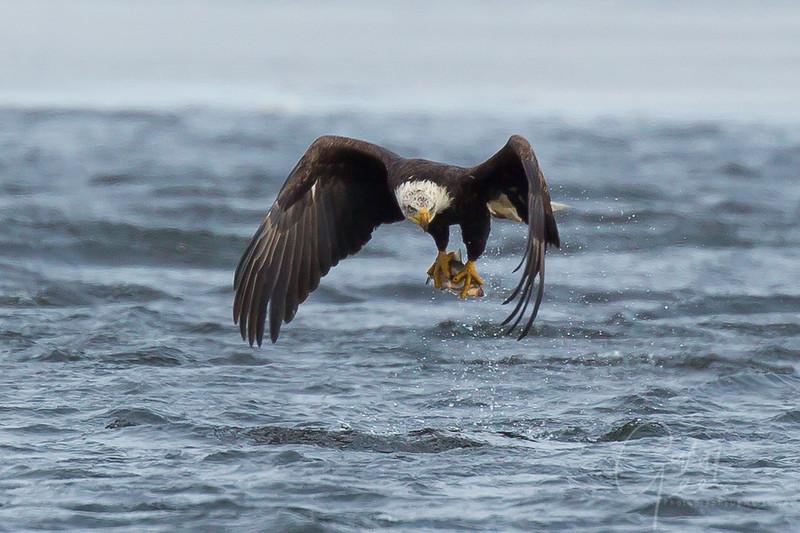 Eagle_2014-65