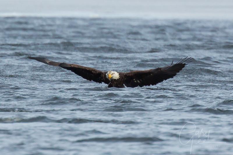 Eagle_2014-61