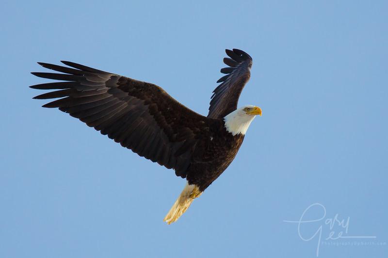 Eagle_2014-47