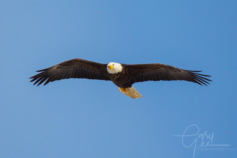 Eagle_2014-42