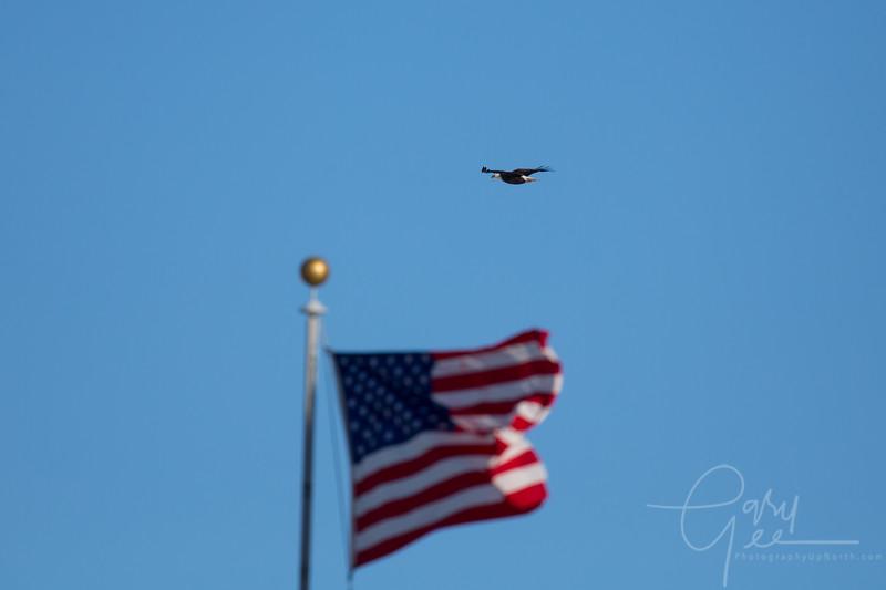 Eagle_2014-8