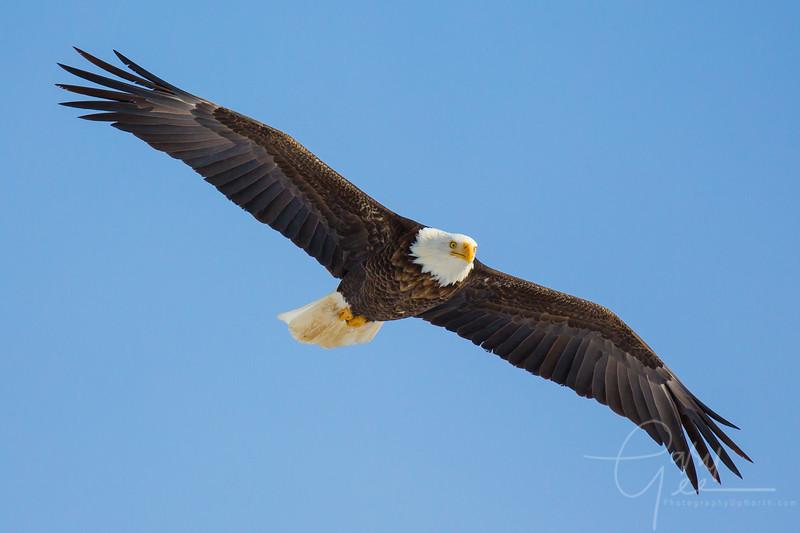 Eagle_2014-53