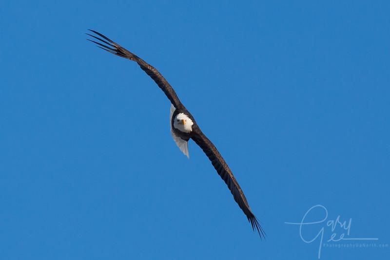 Eagle_2014-23