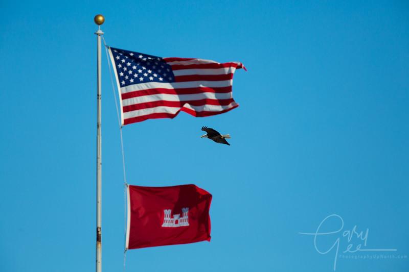 Eagle_2014-9