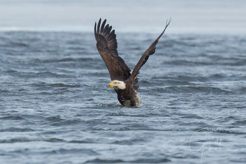 Eagle_2014-62
