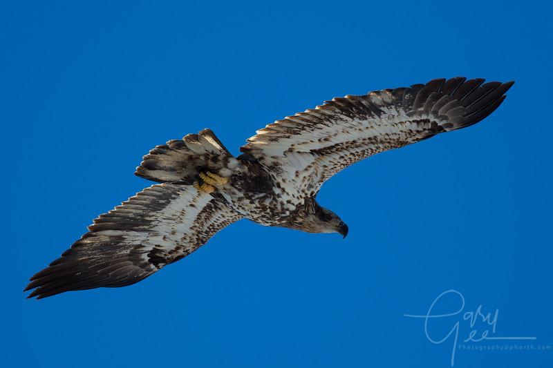 Eagle_2014-10