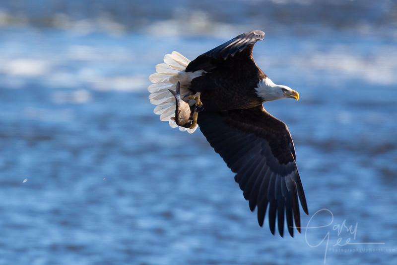 Eagle_2014-20
