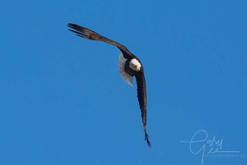 Eagle_2014-24
