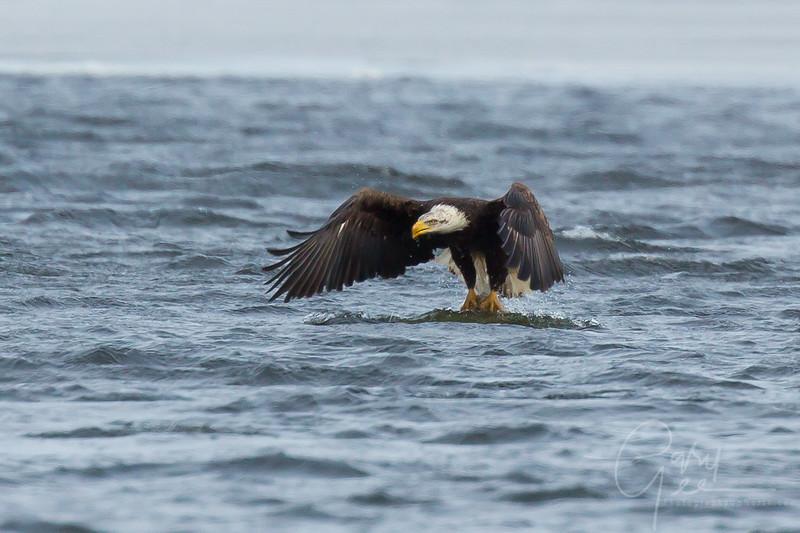 Eagle_2014-63