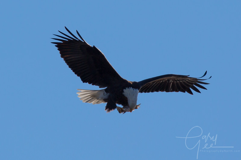 Eagle_2014-16