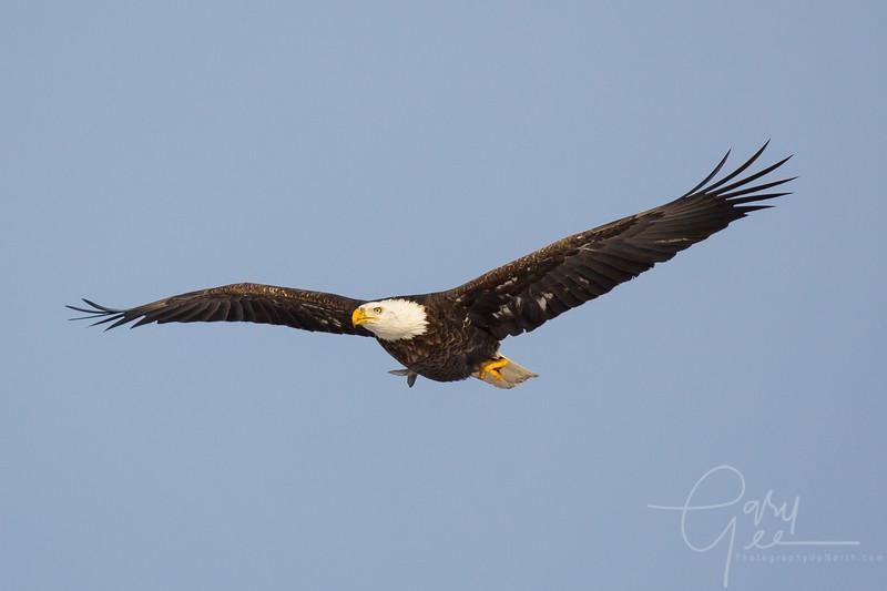 Eagle_2014-32