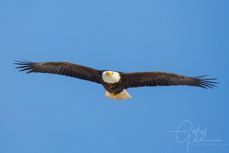 Eagle_2014-43