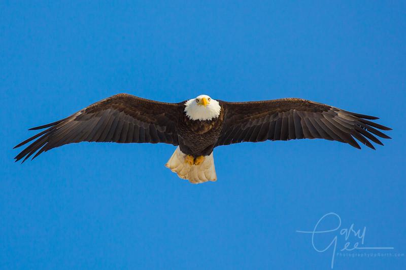 Eagle_2014-46