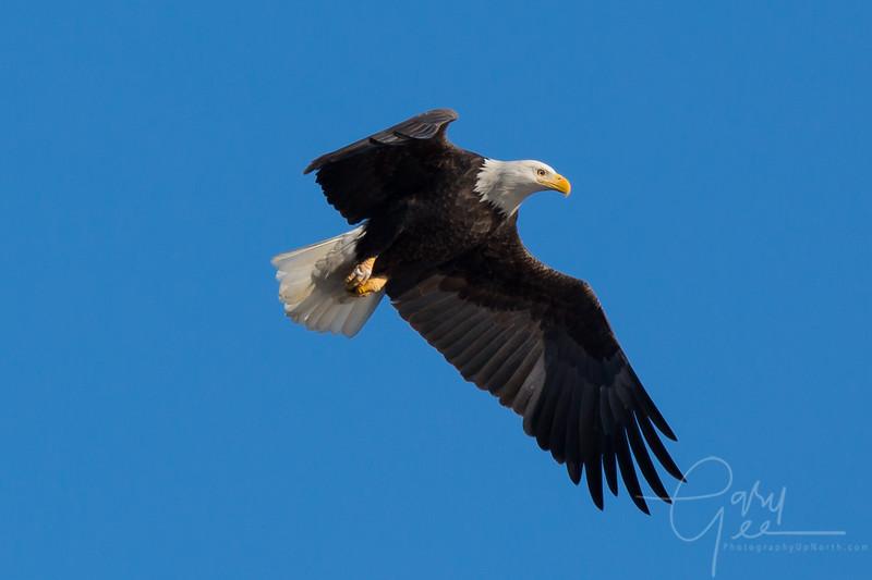 Eagle_2014-25