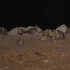 Double-banded Sandgrouse (Pterocles bicinctus) Etosha NP, Namibia
